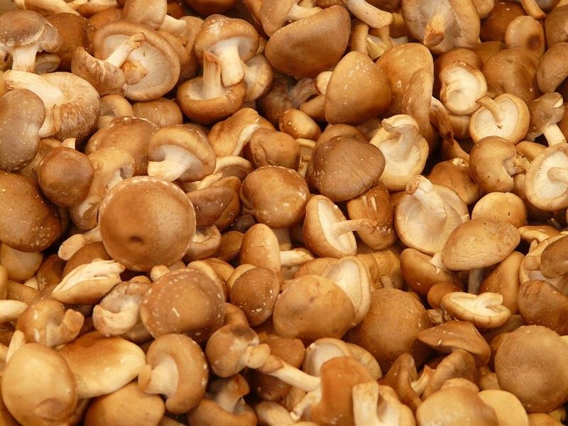 Funghi shiitak